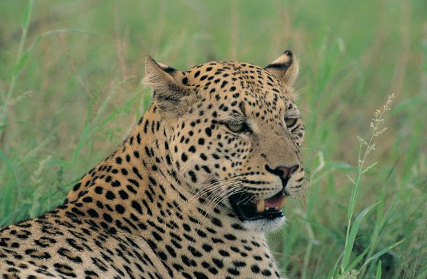 Kruger National Park: The Window To Wild Africa