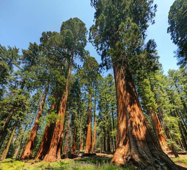 Yosemite National Park – Splendid Lanscape And History