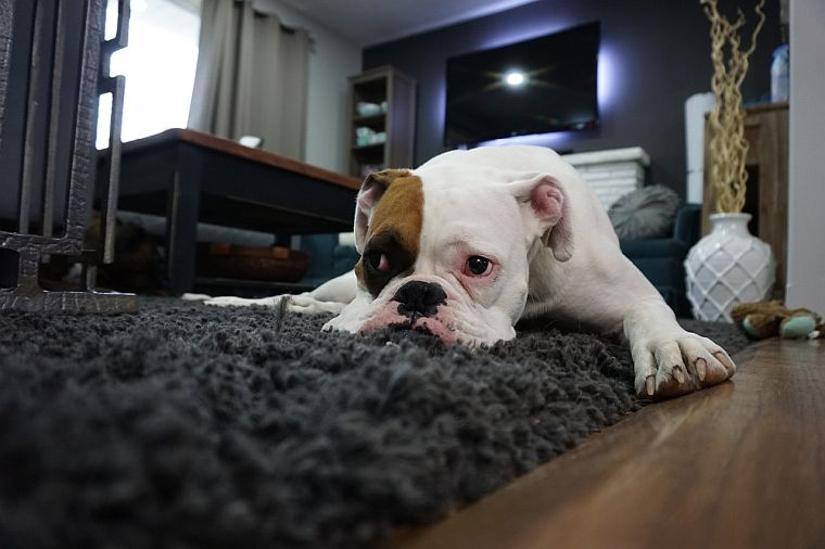 No more dirty paws: 3 best absorbent doormats for dogs