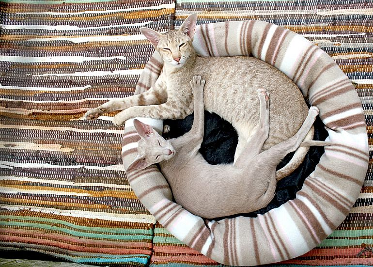 Cozy kitty: 3 adorable best heated cat beds
