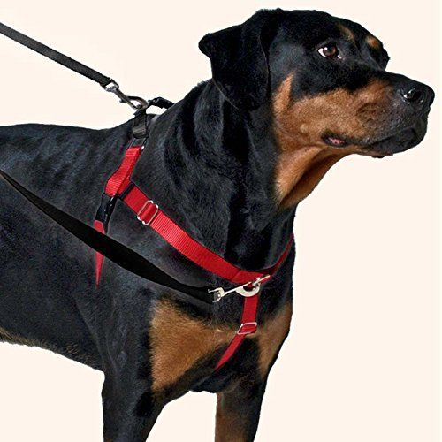 Freedom training set: the best and most popular harness for pitbulls among pittie owners.