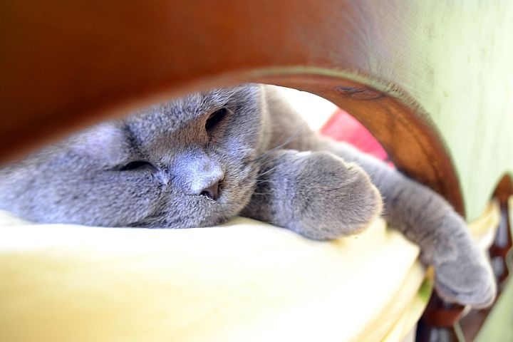Image result for Why your cat could benefit from a cat bed