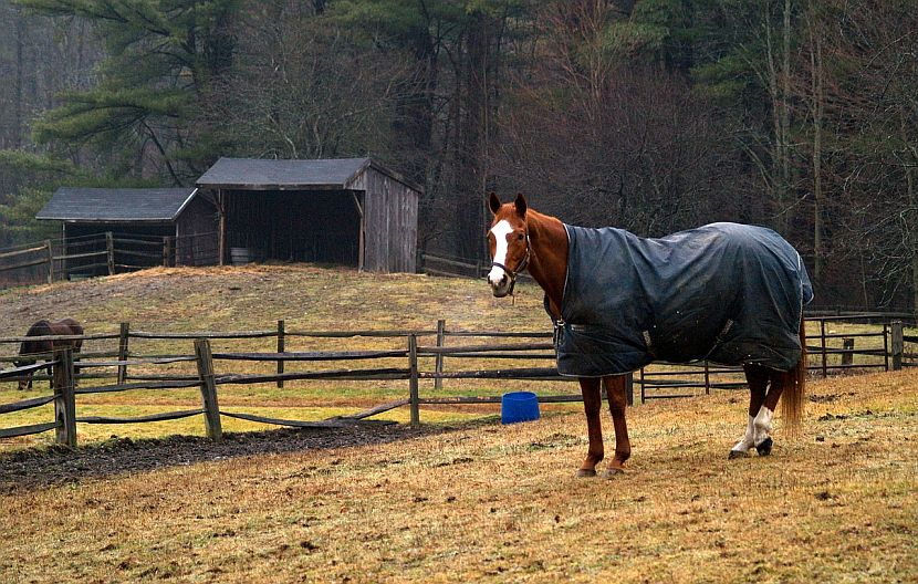 Here's what I'd call the best horse blankets