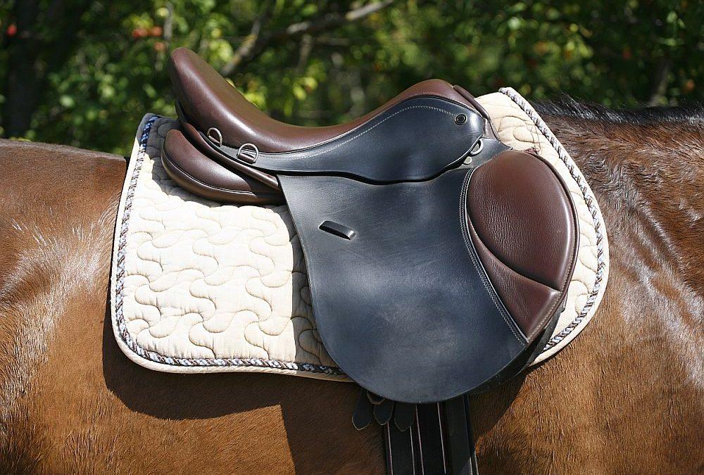 Saddle Pad 101: Best picks, materials & shapes