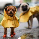 Dog Rain Coats: Keep Your Furry Family Member Dry