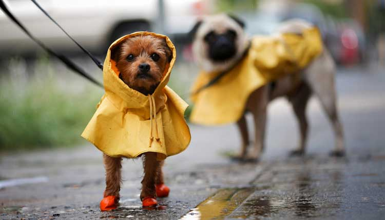 Dog Rain Coats: Keep Your Furry Family Member Dry