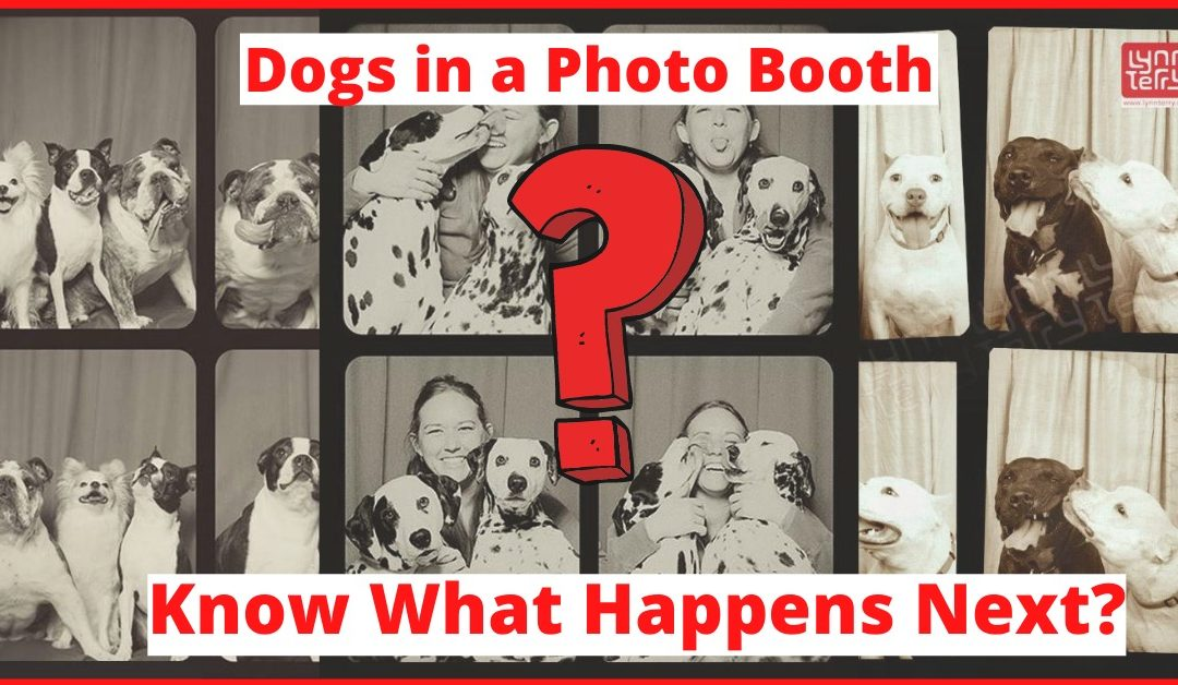 Dogs in a Photo Booth. Then This Happens