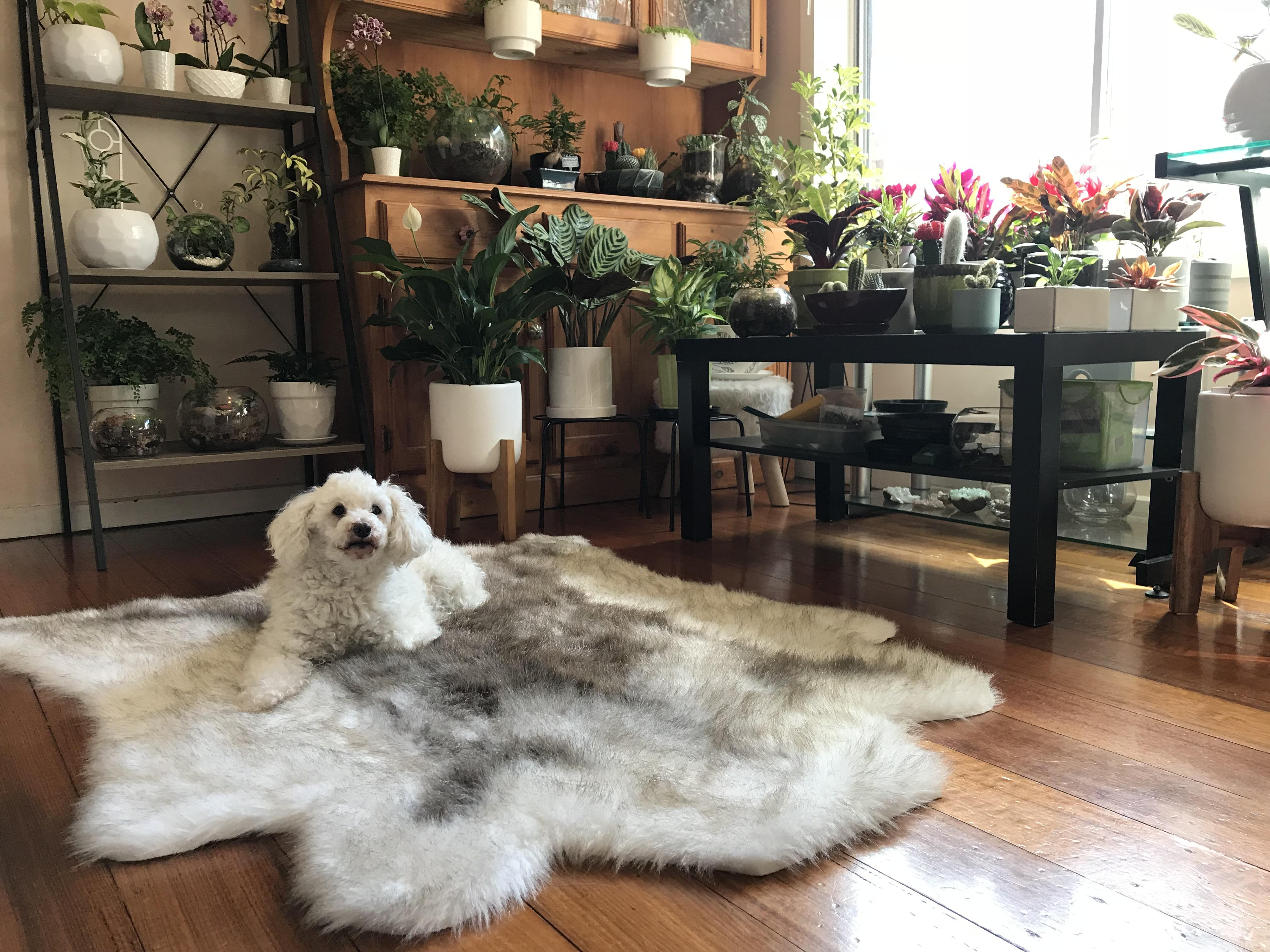This dog really took control of this cozy space with a lot of plants
