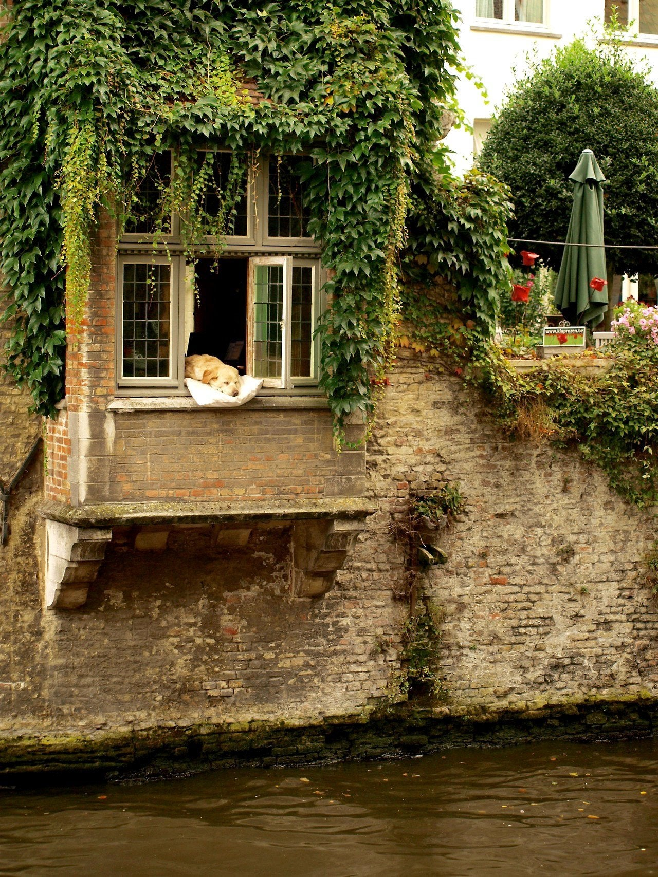 Dog sleeping at the window, over the river