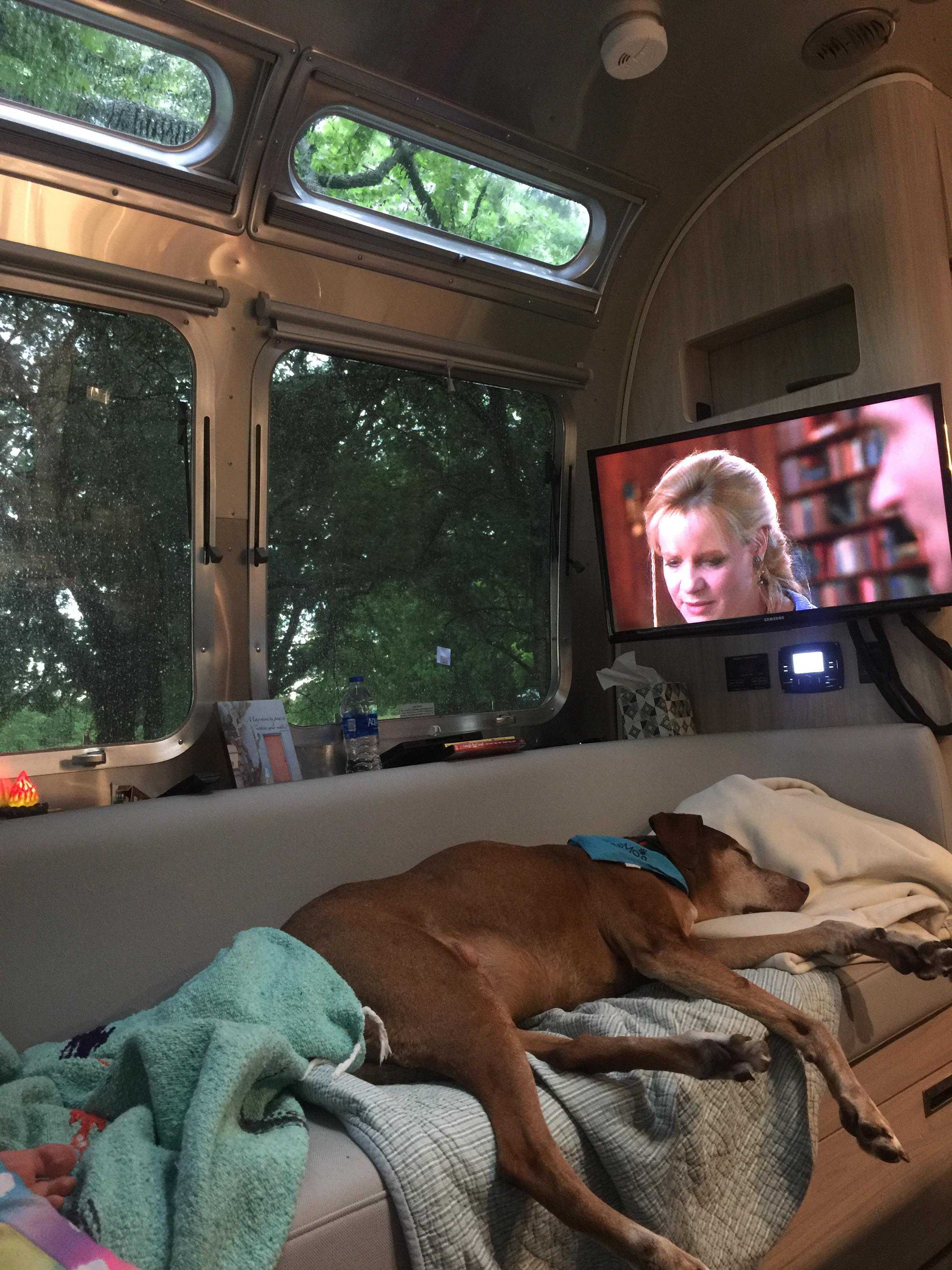 This dog sleeping on the couch, in an RV, on a rainy day