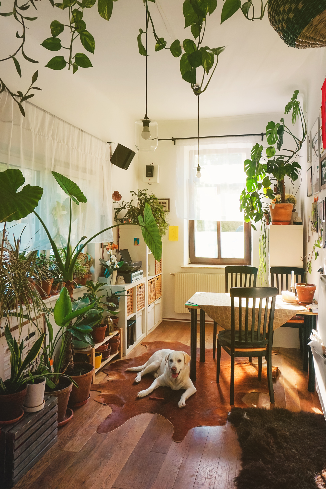 Cozy summer room with lots of plants